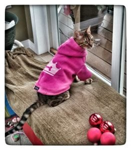Protecting and preparing your #pet for the cold winter Latest Posts