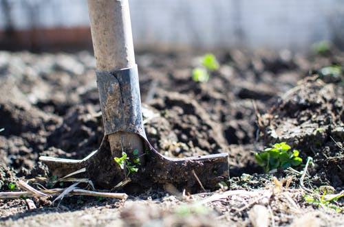 5 Simple Yard CleanUp Tips yard cleanup