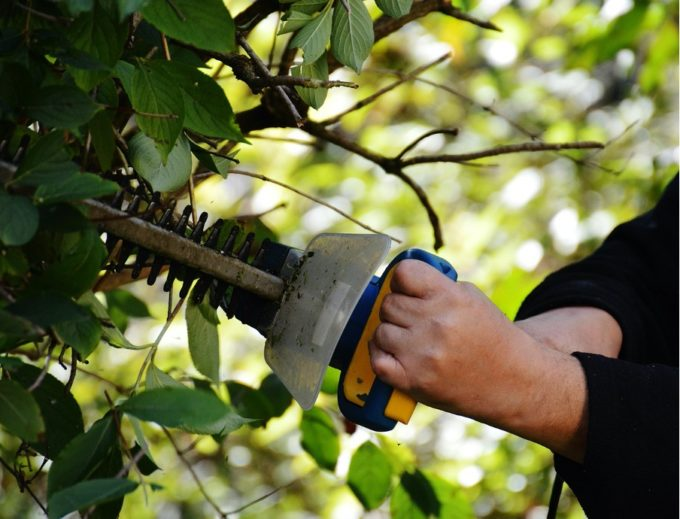 Tools for healthy hedges