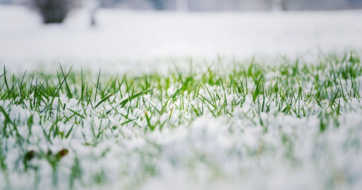 Tips for Decorating Your Artificial Lawn for Christmas