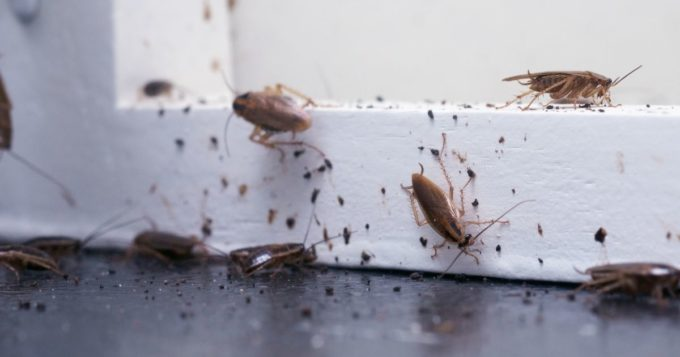 How To Get Rid Of Home Pests